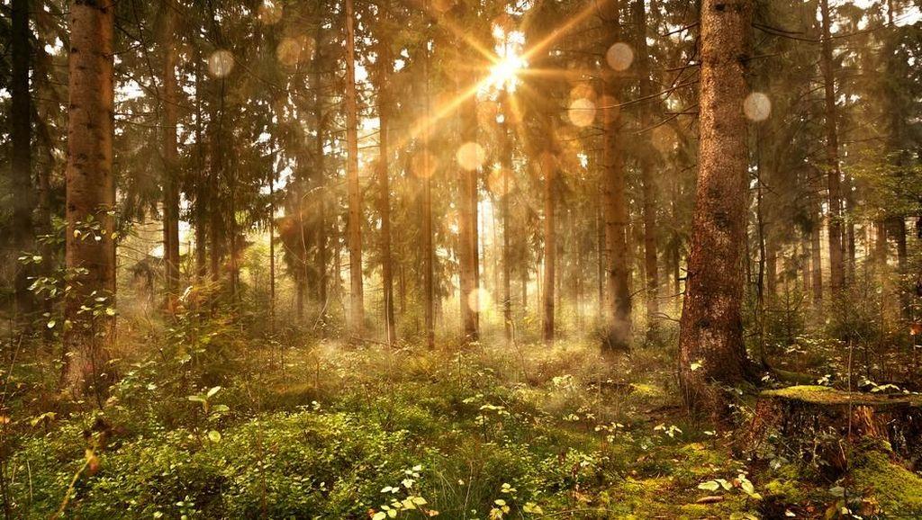 KLHK Klaim dalam 4 Tahun Nilai Kualitas Lingkungan Hidup 66,5