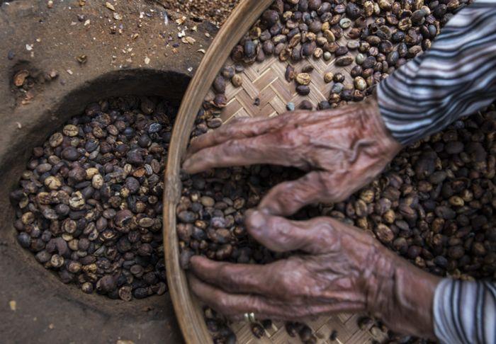Seorang warga tengah mengolah biji-biji kopi di desa Gombengsari, Banyuwangi. M Agung Rajasa/Antara Foto.