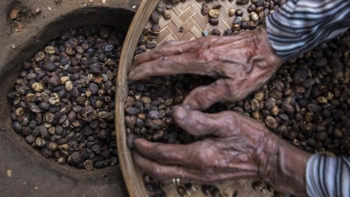 Petani kopi Jumaira yang berumur 100 tahun menjemur biji kopi.