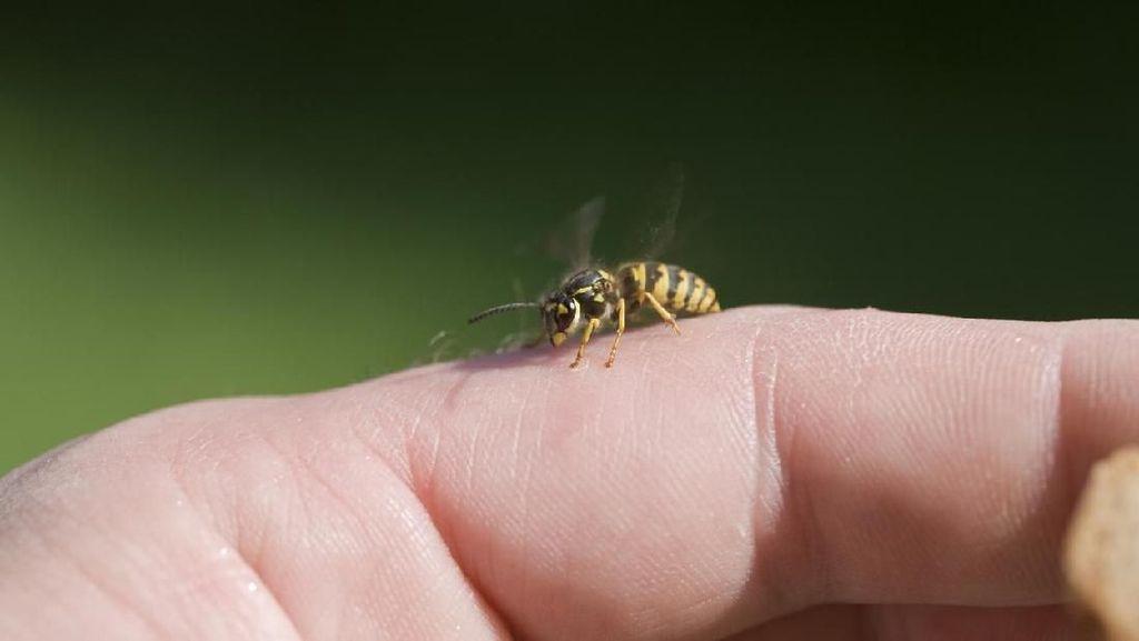 Keluhkan Sakit, Rupanya Lebah Makan Kelenjar Air Mata Wanita Ini