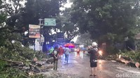 Informasi petugas di lapangan, di kawasan Bogor Selatan pohon tumbang terdapat di lima titik.
