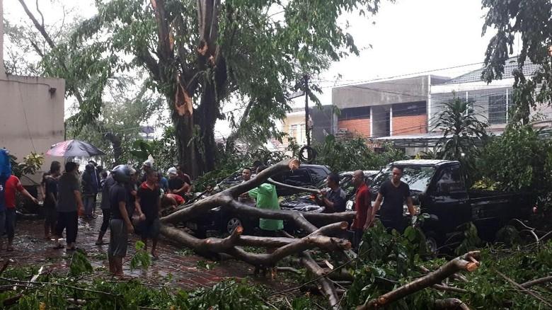 Puting Beliung di Bogor, 6 Kendaraan Ringsek Tertimpa Pohon