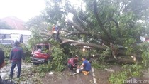 Ganasnya Puting Beliung Bogor: Pohon Tumbang-Atap Beterbangan