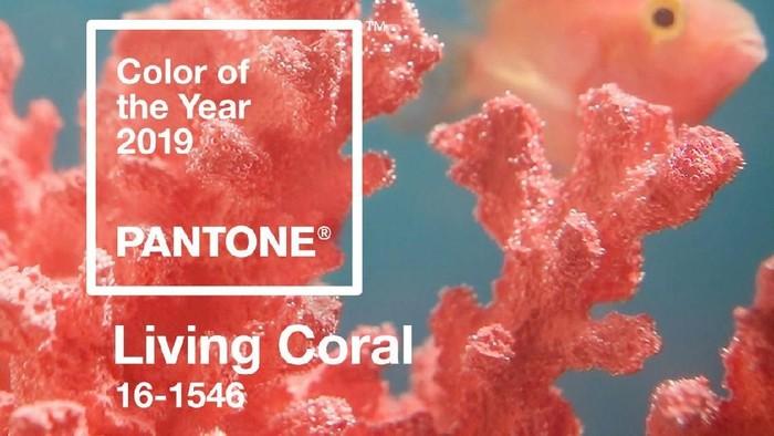 Living Coral, tren warna 2019 dari Pantone. Foto: Dok. Pantone
