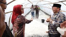 Kembangkan Garam Rakyat, Bupati Serang Belajar Budidaya ke Aceh