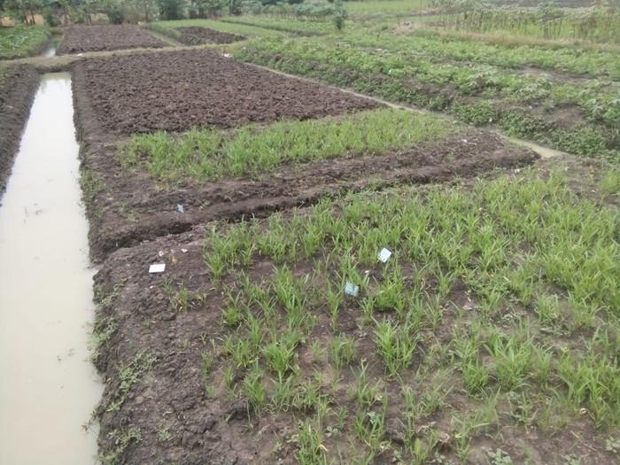 e-KTP yang terbuang di daerah Pondok Kopi, Duren Sawit, ditemukan tercecer. Diduga e-KTP tersebut sengaja dibuang untuk membuat gaduh. (Foto: Dok. Ketua RW 11 Pondok Kopi)