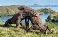 Taman Nasional Komodo, Kebanggaan Indonesia Diakui Dunia