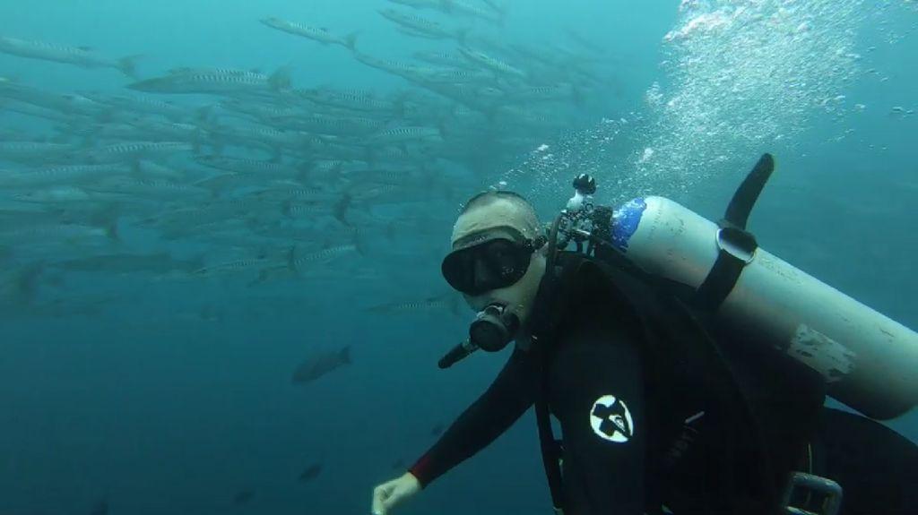 Foto: Dahsyatnya Alam Bawah Laut Wakatobi