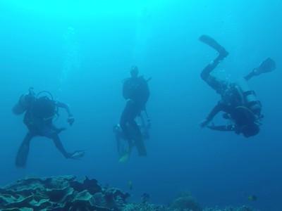 My Trip My Adventure: Selami Indahnya Wakatobi