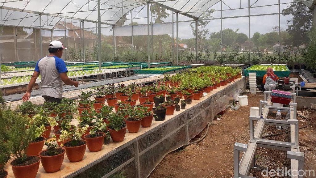 Melihat Agro Technopark di Dusun Sumbermulyo Gunungkidul