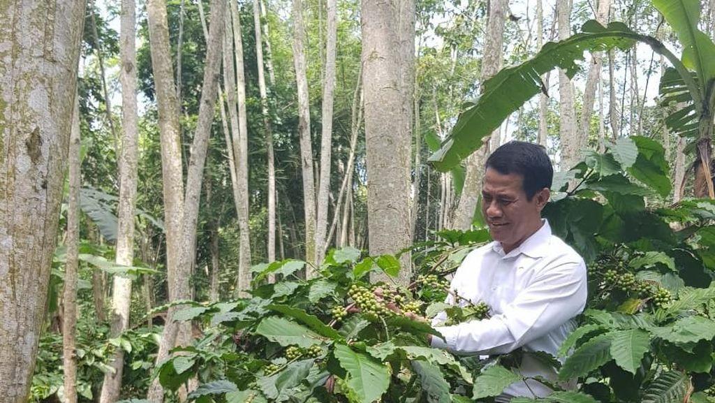 Lulusan Dibutuhkan Industri, Kementan Susun Kurikulum Kopi dan Kakao