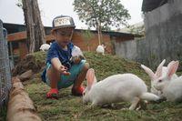 Di Zona Australiana, pengunjung juga bisa memberi makan kelinci New Zealand