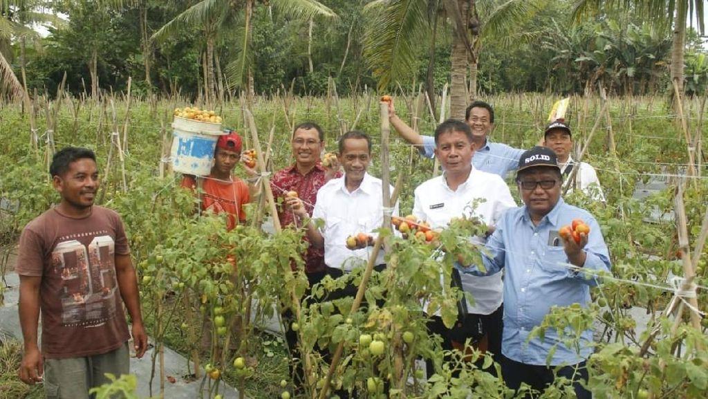 Tingkatkan Penghasilan, Petani di Maluku & Malut Dimodali Rp 20 Juta