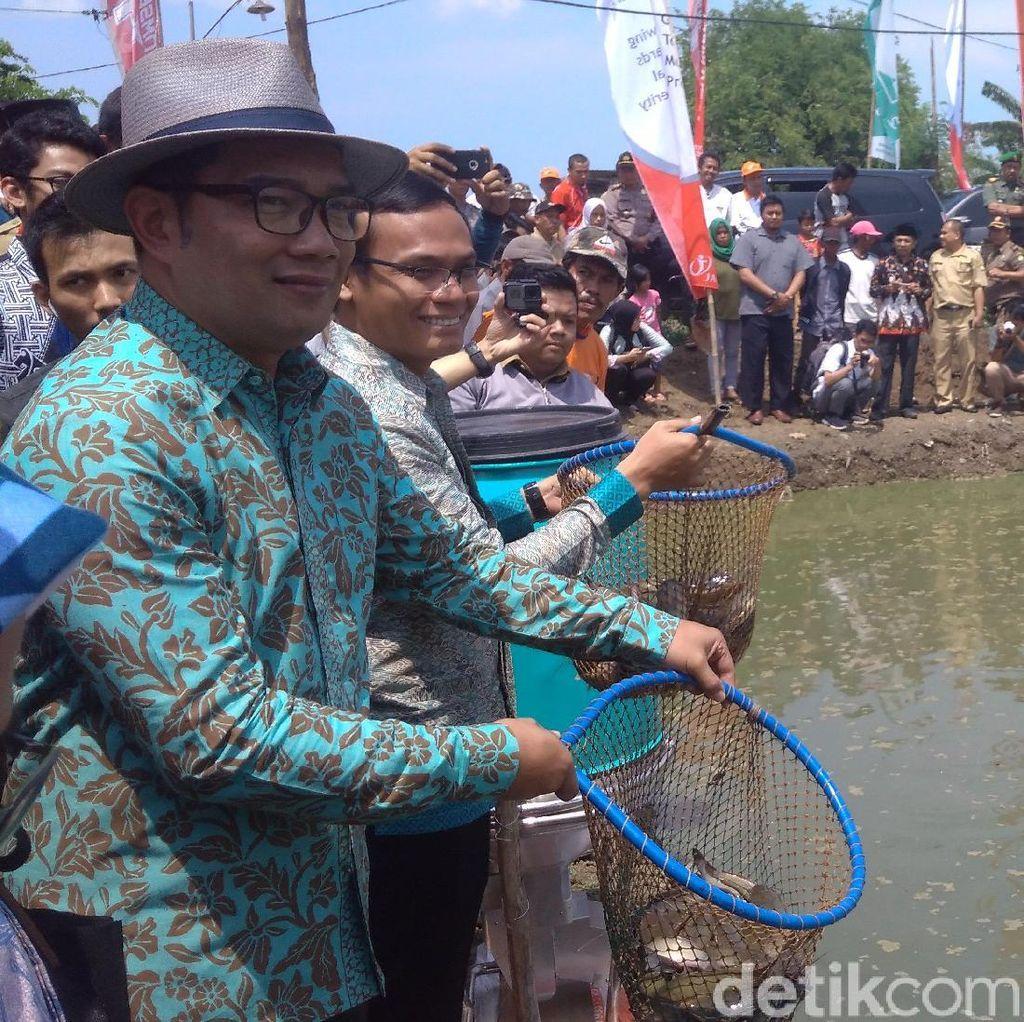 Di Kampung Digital Indramayu Bisa Atur Pakan Ikan Pakai Ponsel