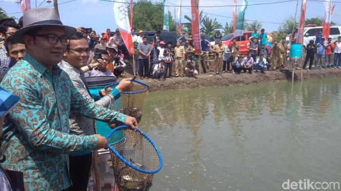 Gubernur Jawa Barat Ridwan Kamil di Kampung Perikanan Digital di Indramayu (Foto: Sudirman Wamad)