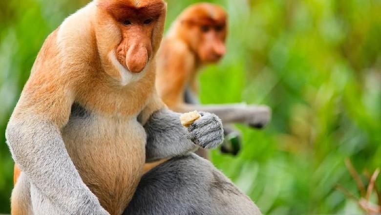 Foto: taman safari