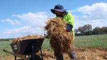 Warga Asing Berketerampilan Rendah Bisa Tinggal Permanen di Australia