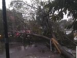 Atap Terbang-Pohon Tumbang Tersapu Puting Beliung di Cianjur