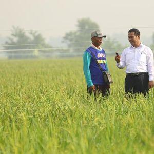 DPR: Anggaran Turun Tapi Kementan Mampu Genjot Produksi & Ekspor