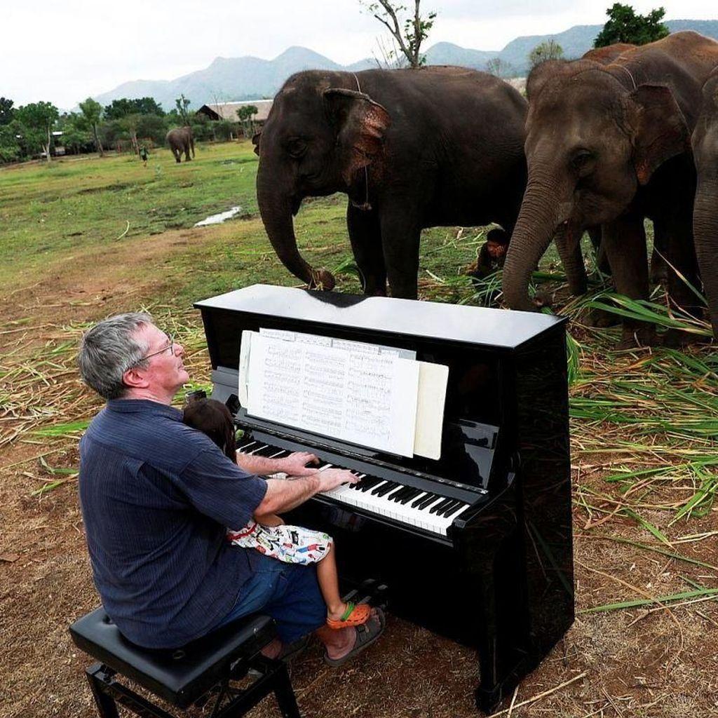 Aksi Menyentuh Paul Barton Main Piano di Depan Gajah yang Sakit