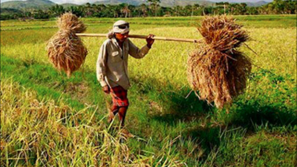 Cara Pemerintah Dorong Ekspor di Sektor Pertanian dan Perikanan