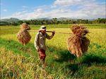 BPN Prabowo Sebut Digital Farming Solusi Ketahanan Pangan