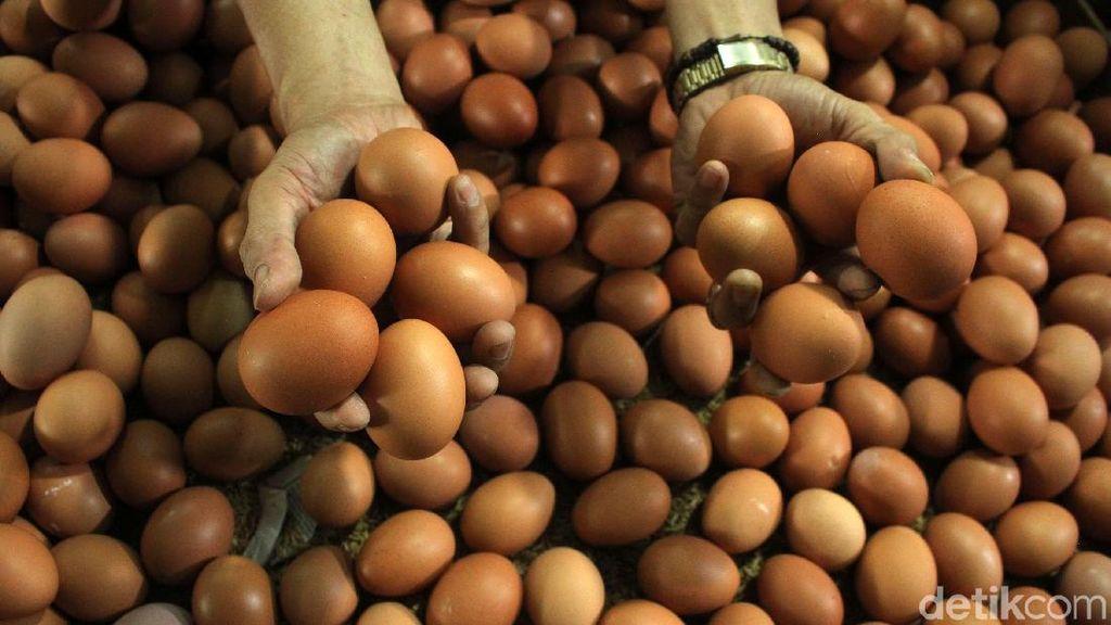 Begini Anomali Harga Telur Jelang Akhir Tahun