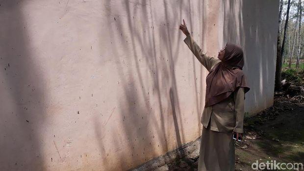 Cerita Guru di Bojonegoro tentang 'Teror' Ulat Pohon Jati di Sekolahnya