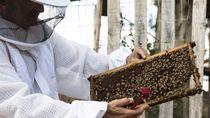 Cerita Eks Tentara AS yang Sembuh dari Depresi Berkat Lebah