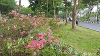 Sudah ada sekitar 2.000 bunga yang sudah disebar dan tanam. Hanya di pinggir-pinggir jalan protokol dan taman tertentu.