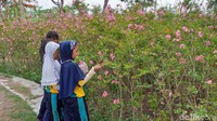 Beberapa titik penanaman sakura di Surabaya di antaranya di Jalan Mayjend Sungkono dan Jalan Adityawarman. Tingginya kini berkisar antara 1-1,5 meter.