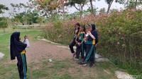 Pohon sakura yang ditanam pemkot tidak diimpor dari Jepang, melainkan dibudidayakan sendiri di Indonesia, tepatnya di daerah Gunungsari, Kota Surabaya.