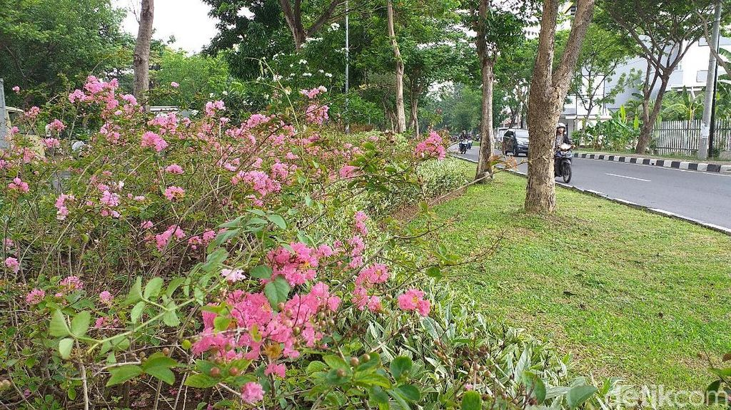 Bukan Hanya Tabebuya, Di Surabaya Juga Ada Pohon Sakura Sungguhan