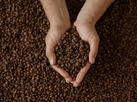 Food and Drink, Raw Coffee Bean, Human Hand, Top View