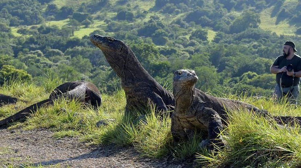 Media-media Asing Soroti Wacana Tarif Premium Pulau Komodo