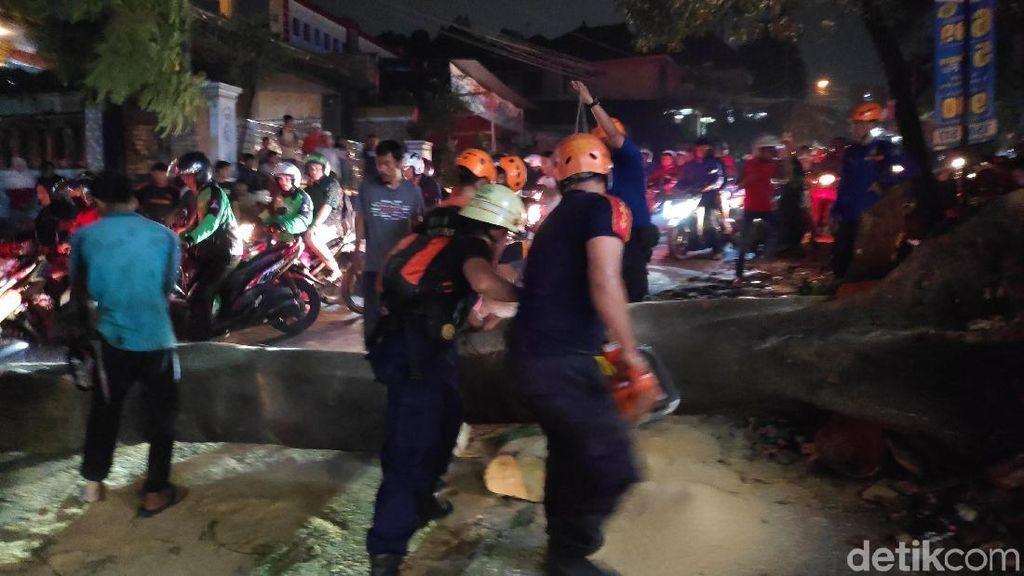 Pohon Tumbang di Jalan KSU Raya Depok, Lalin Macet Parah