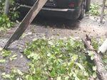 Pohon Tumbang Timpa Mobil hingga Kabel PLN di Jaksel