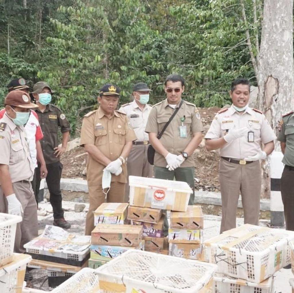 Hendak Diselundupkan ke Jakarta, 3.175 Burung Disita di Lampung