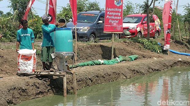Kampung Perikanan Digital, Merintis Kejayaan Budidaya Lele Lewat Genggaman