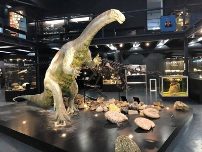 Museum Ini Ungkap Evolusi Mahluk Bumi Selama 600 Juta Tahun