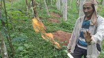 Semburan Gas Alam di Banjarnegara Ini Ditelantarkan Begitu Saja