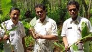 Kementan Dorong Petani Manfaatkan Lahan untuk Tanaman Herbal