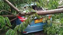 Hujan Deras Sore Tadi, Pohon Tumbang di Sejumlah Tempat di Jaksel
