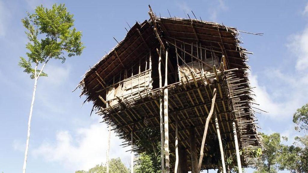 Foto: Melihat Lebih Dekat Suku Rumah Pohon dari Papua