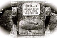 Ikan Mujair Ditemukan Pertama Kali Oleh Pria Mbah Moedjair Asal Blitar