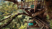 Kisah Rumah Pohon Tertinggi Dunia Melawan Pembalakan Liar