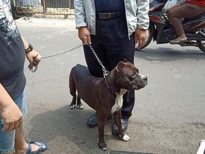 Fakta-fakta Pitbull Serang Satpam di Sawah Besar