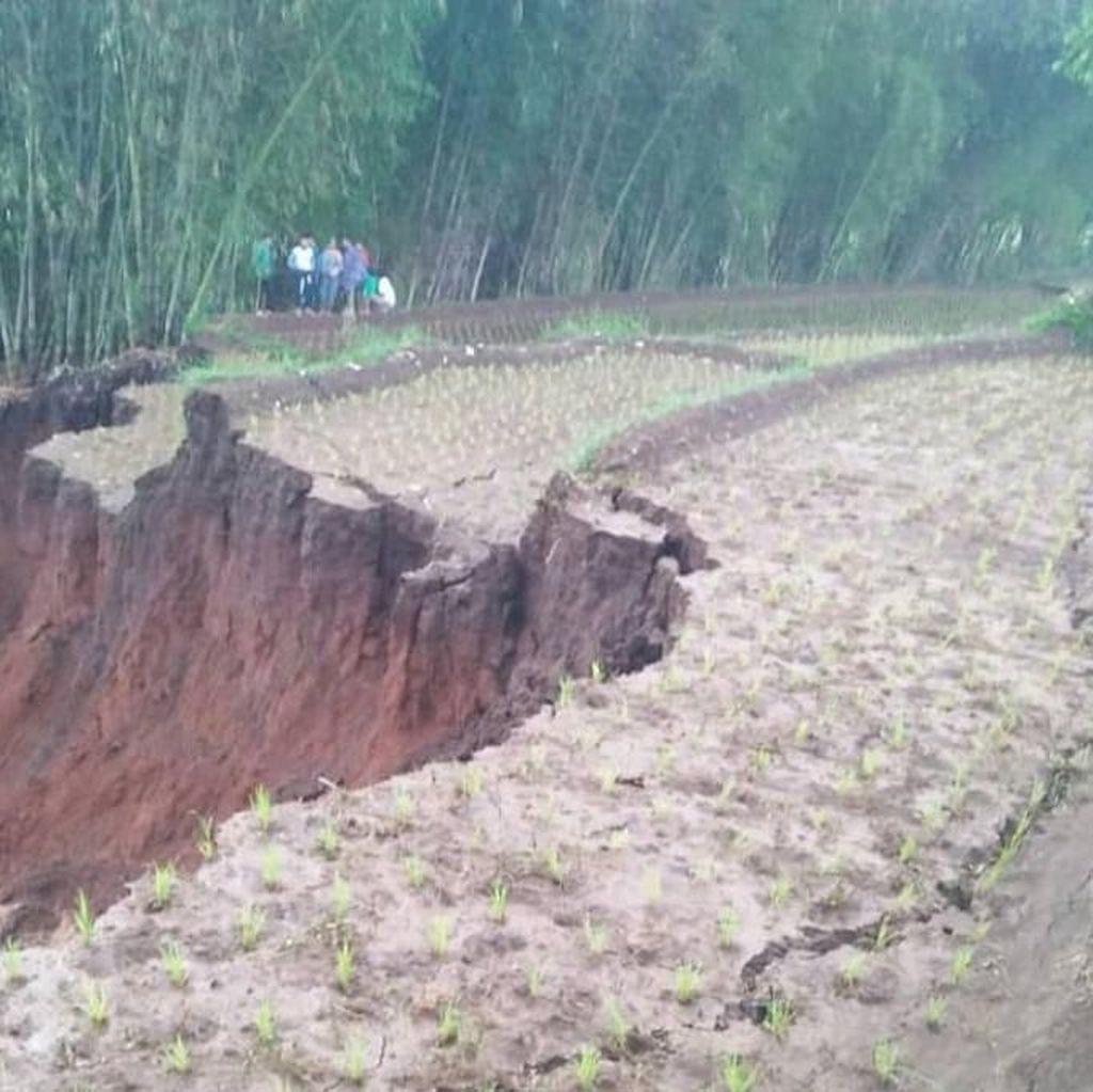 Longsor Timbun Sawah dan Kebun Warga Pacet Bandung