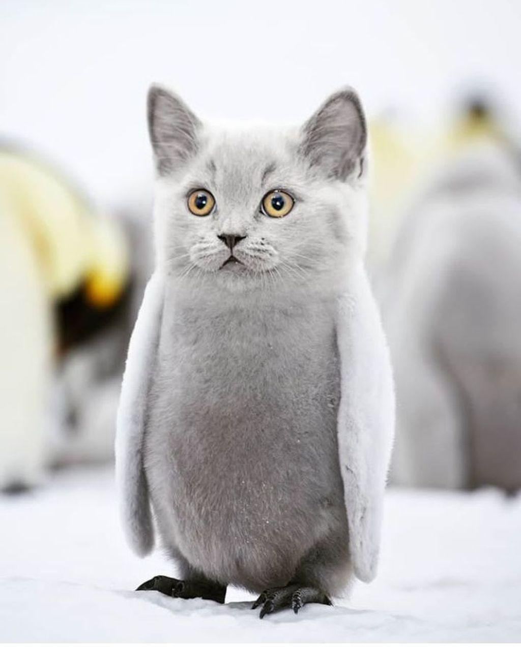 63 Gambar Binatang Lucu Bikin Ngakak HD Gambar Pixabay