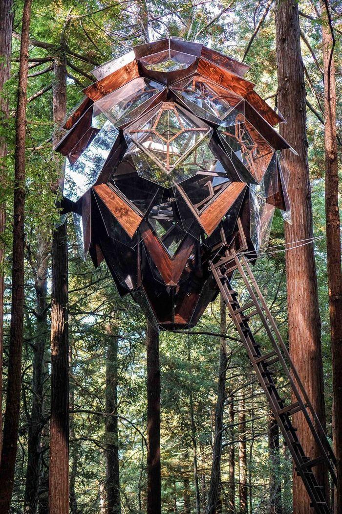 Untuk masuk ke rumah pohon ini harus menaiki tangga kayu dengan kemiringan yang curam. Istimewa/Dok.curbed.com